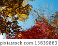 Autumn leaves 13639863