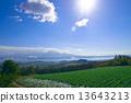 富良野盆地早晨風景 13643213