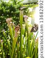 식충 식물 13682892