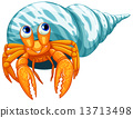Hermit crab 13713498
