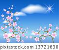 Sakura blossom 13721638
