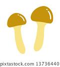 滑菇 蘑菇 素材 13736440