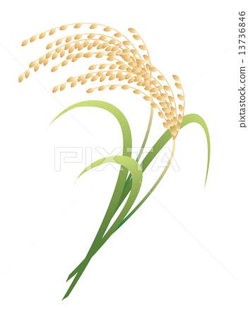 Vector Vectors Ear Of Rice Stock Illustration