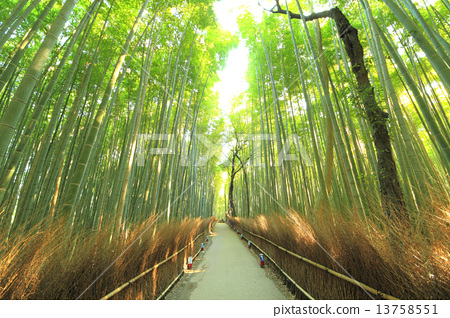 December Kyoto Arashiyama · Bamboo forest small diameter 13758551