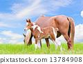 mare, foal, white 13784908