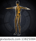 system biology body 13825084