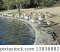 冬天候鸟在休息在inage公园和巨型海燕的inage公园的inage 13836882