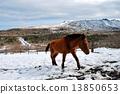 雪三原和一匹马 13850653