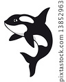 Killer whale 13852963