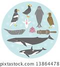 สัตว์ทะเลในประเทศตอนเหนือของฮอกไกโด 13864478