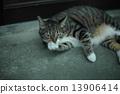 cat, pussy, cute 13906414