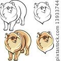 dwarfish Spitz dog breed 13933744