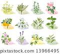 芳香 矢量 植物 13966495