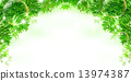 fern verdure vector 13974387