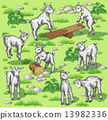 Young goats 13982336