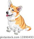 vector sketch dog Pembroke Welsh corgi smiling 13990493