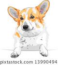 vector sketch dog Pembroke Welsh corgi smiling 13990494
