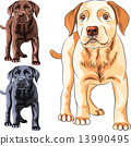 vector set puppy dog breed Labrador Retriever 13990495