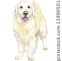 vector sketch yellow gun dog breed Labrador Retriever 13990501