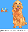 vector dog breed Golden Retriever 13990503