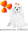 Valentine card with dog Maltese and hearts 13990522