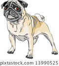 vector sketch angry dog pug breed 13990525
