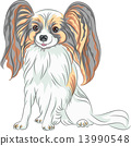 vector pedigreed dog Papillon breed 13990548