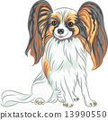 vector pedigreed dog Papillon breed 13990550