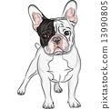 vector sketch domestic dog French Bulldog breed 13990805