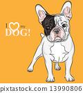 vector sketch domestic dog French Bulldog breed 13990806