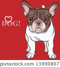 vector sketch domestic dog French Bulldog breed 13990807