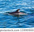 Dolphin 13990900
