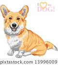 vector sketch dog Pembroke Welsh corgi smiling 13996009
