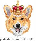 vector sketch dog Pembroke Welsh corgi smiling in gold crown 13996010