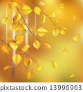 Birch branches 13996963