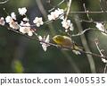 Plum flowers and mezzo 14005535