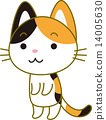calico cat, japanese cat, cat 14005630