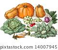 Various vegetables 14007945