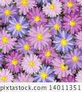 Autumn flower 14011351