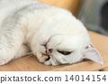 猫 猫咪 小猫 14014154