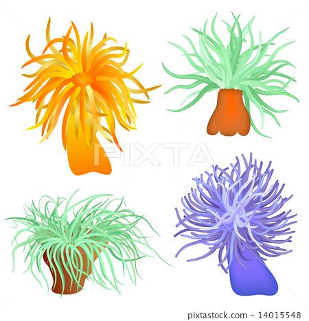 various sea anemones 14015548