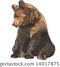 vector, funny, bear 14017875
