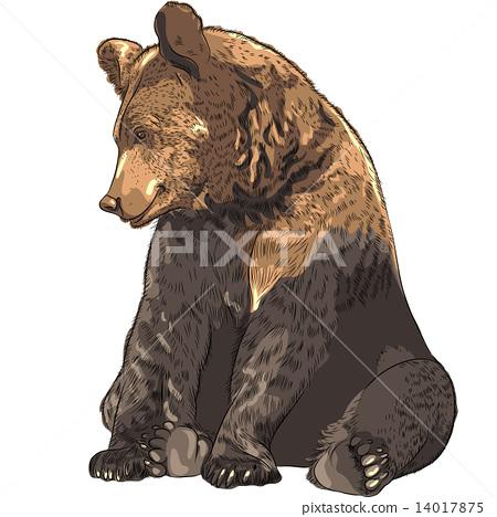 Vector funny bear sitting 14017875