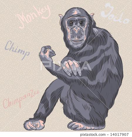 vector funny cartoon monkey Chimpanzee 14017907