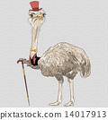 vector funny Ostrich Bird hipster 14017913