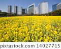ดอกไม้บานเต็มที่,ทุ่งดอกไม้,ดอกเรป 14027715