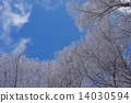 覆有霜的树 冰霜覆盖的树木 冬季山区 14030594