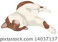 滾動的茶白色貓 14037137
