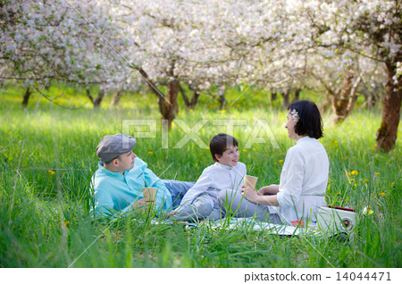 Young family picnicking in blooming apple garden 14044471