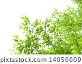 新鮮的綠色 14056609
